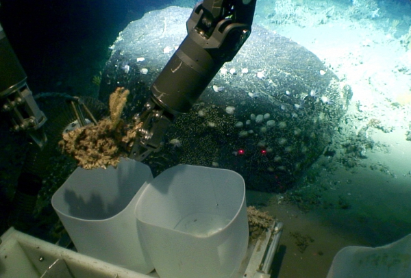 The ROV securing a sample of coral rubble with an octocoral attached in collection boxes. The large bolder is colonised by large barnacles. Laser dots are 11cm apart. The boulder fell to the seabed from a melting iceberg over 10,000 years ago.